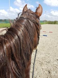 Angst met paardrijden